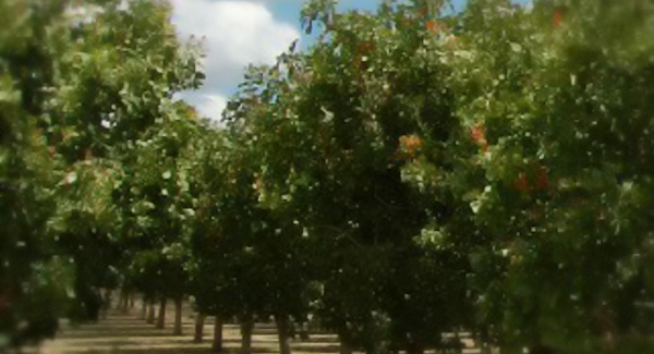 Horizon Nut Company Growers' orchards can be found throughout Central California.